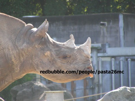 A005 rhino 001 wm