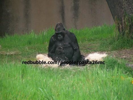 A006 baby gorilla 001 wm