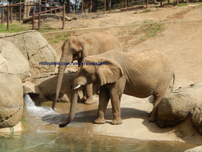 A010 elephant 001 wm