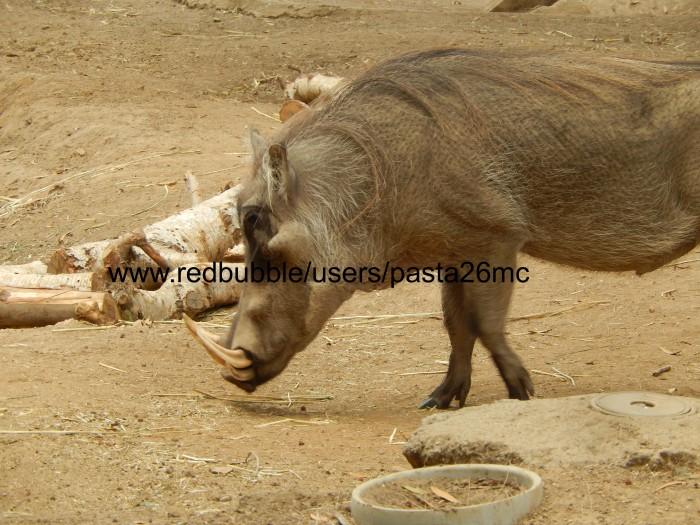A031 warthog 001 wm