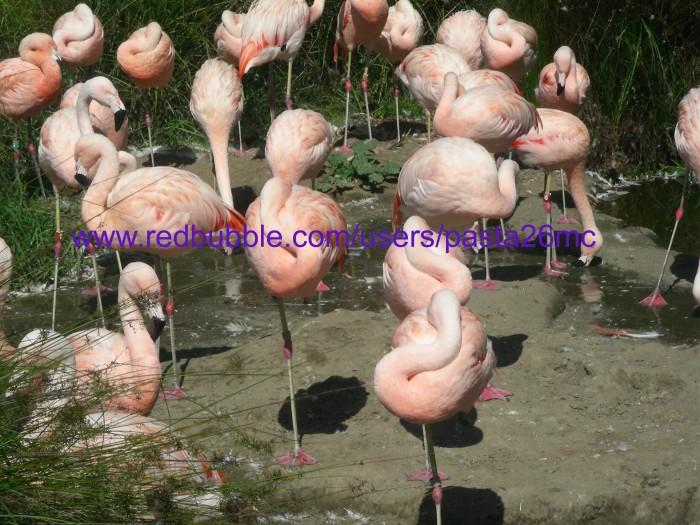 A036 birds 004 wm