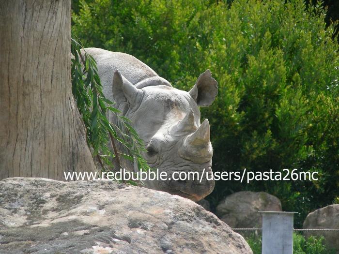 A037 rhino 002 wm