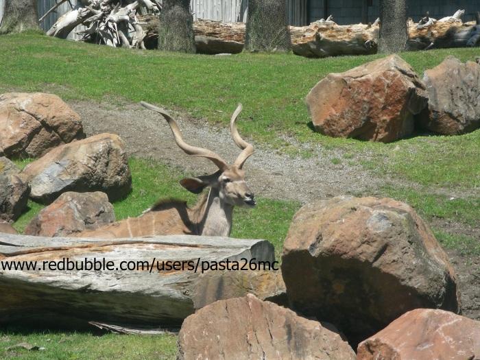 A041 kudu 001 wm